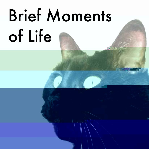 Brief Moments of Life Cover